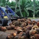 Where the Palm Trees Grow | sustainability | Scoop.it