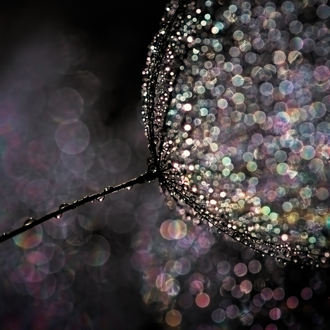 How To Create Beautiful Bokeh Images | Artdictive Habits : Sustainable Lifestyle | Scoop.it