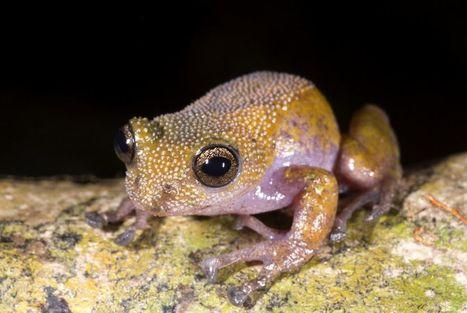 La rana que cambia de color y otros tesoros ocultos del Gran Mekong | Bichos en Clase | Scoop.it
