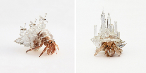 Artist 3D-Prints City-Shaped Shells For Hermit Crabs | tecnologia s sustentabilidade | Scoop.it