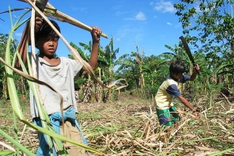 Schendingen van kinderrechten in Filipijnen houden aan - MO | AAV 2 Cluster | Scoop.it