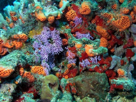 "Not all sponges are named ""Bob""! 
