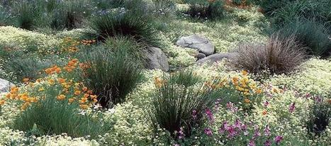 Back To Nature | My Garden Insider | Native Plants | Scoop.it