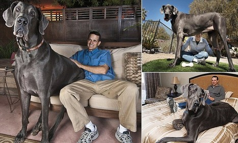 Giant George the world's tallest dog passes away at home | enjoy yourself | Scoop.it
