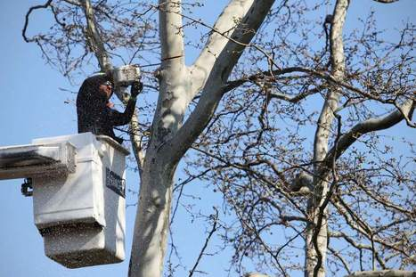 Preserving trees along streets, highways is good for people | Transport & Logistics | Scoop.it