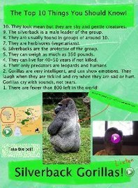 Silverback Gorilla: gorilla, iván, ivan, silverback | Glogster EDU - 21st century multimedia tool for educators, teachers and students | Twitter for Educator Resources | Scoop.it