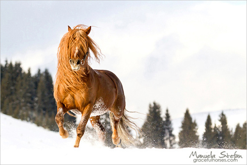 Hutul Horses of the Romanian Carpathians - Equitrekking