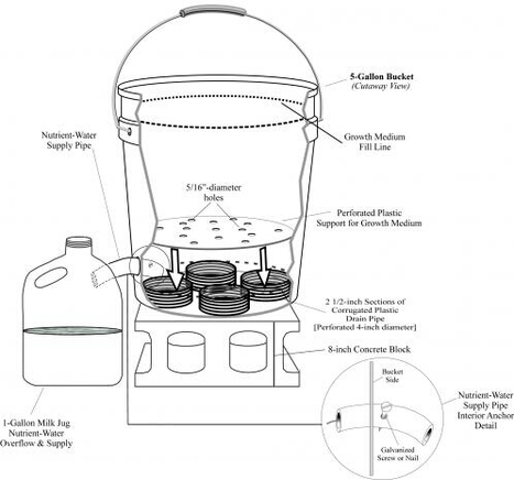 5 gallon bucket self watering planter   Think Like a Permaculturist   Scoop.it