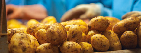 Learn about the Nutrition facts of  potatoes in Cyprus   Upcycle Club   Scoop.it