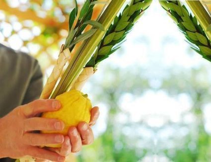 The Lulav and Jewish Unity | Jewish Education Around the World | Scoop.it