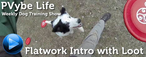 Flatwork Introduction with Loot | Dogs | Scoop.it