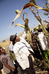 AGRA: helping agribusiness conquer African agriculture? | Questions de développement ... | Scoop.it