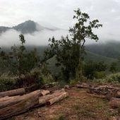 Au Laos, une déforestation massive et silencieuse | Environnement | Scoop.it