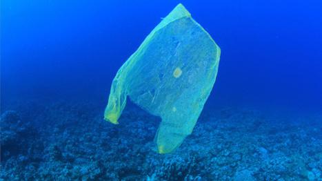 Les plastiques biodégradables ne peuvent pas se décomposer dans l'océan | Ca m'interpelle... | Scoop.it