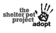National Animal Shelter and Rescue Appreciation Week | Animals R Us | Scoop.it
