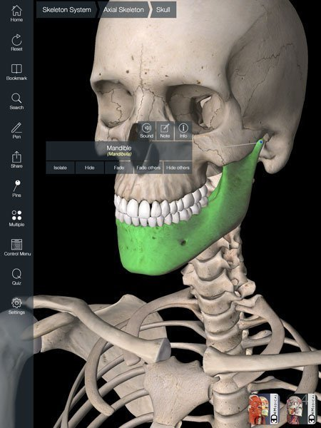 Essential Skeleton App for the iPad - The Whiteboard Blog | iPads in Education | Scoop.it