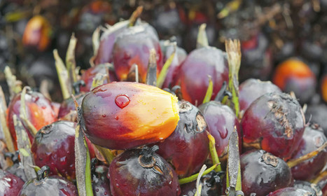 Why This Palm Oil Sustainability Group Ditched Its Own Members | Sustaining Values | Scoop.it