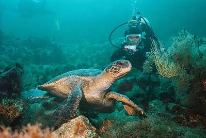 Viajes sostenibles de buceo y snorkeling | Turismo costero y marítimo | Scoop.it