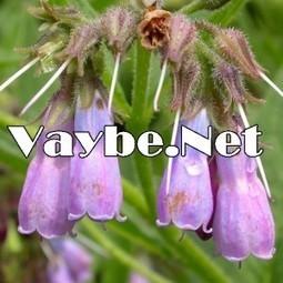 Eşşek kulağını biliyor musunuz | vaybe.net | Scoop.it