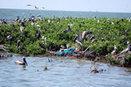 Coastal restoration efforts get boost from $1 million Shell donation - NOLA.com | Fish Habitat | Scoop.it