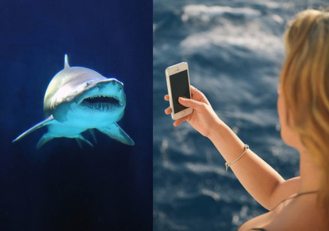 Selfies Cause More Deaths Now Than Shark Attacks | xposing world of Photography & Design | Scoop.it