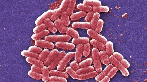 Hallada por primera vez en EE.UU. una bacteria resistente a todos los antibióticos   Ciència al CFA Palau de Mar   Scoop.it
