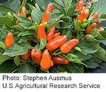 'Teaching Gardens' Nurture Kids' Interest in Healthy Foods - Drugs ... | Healthy Food for Life | Scoop.it