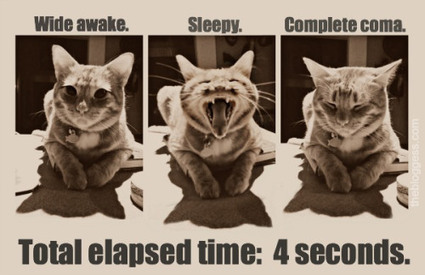 Cats never get insomnia, the furry bastards.   The Bloggess   Animals I like   Scoop.it