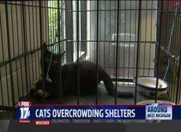 Cats Overrunning West Michigan Animal Shelters & Humane Societies - Fox17 | Cats | Scoop.it