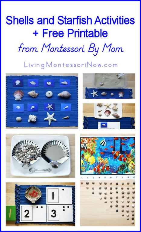 Shells and Starfish Activities + Free Printable from Montessori By Mom | Montessori Inspired | Scoop.it