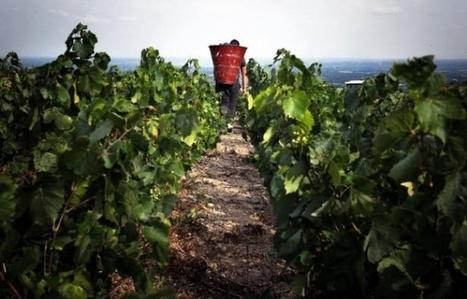 Bordeaux: La filière viticole souhaite «une sortie de l'usage des pesticides» | Le vin quotidien | Scoop.it