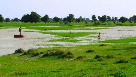 Niger : une société saoudienne en passe d'acquérir 120 000 hectares de terres agricoles | Questions de développement ... | Scoop.it