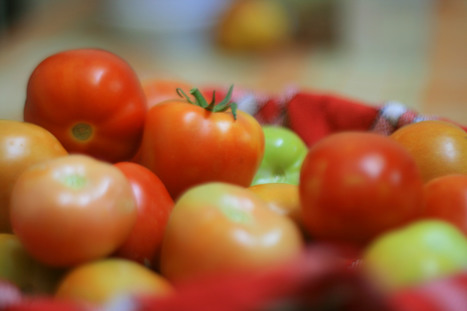 Spanish Researchers Find Organic Tomatoes Has More Nutrients | GMO GM Articles Research Links | Scoop.it