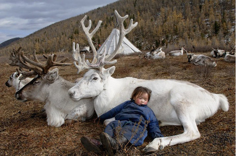 Fascinating Photos of Reindeer People Living in Mongolia | Le It e Amo ✪ | Scoop.it