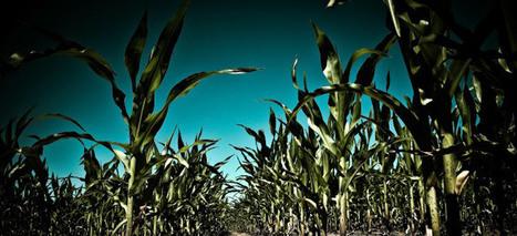 Investir dans l'agriculture familiale | ZEBREA | Entrepreneuriat Social, Management & Créativité pour Entreprises sociales | Scoop.it