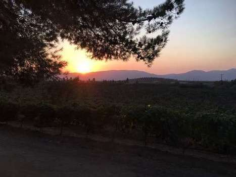 Wine country in Guadalupe? Growing the grape is a burgeoning business in Mexico valley   Baja California   Scoop.it