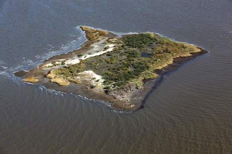 Effort under way to restore Cat Island in Plaquemines - The Advocate | Fish Habitat | Scoop.it
