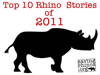 Top Ten Rhino Stories of 2011 | Rhino Horn is NOT Medicine | What's Happening to Africa's Rhino? | Scoop.it