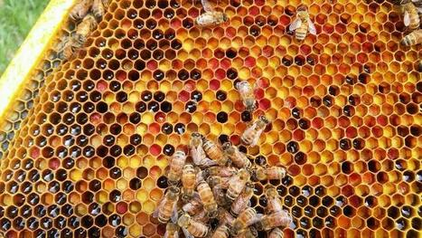 The Importance of Honey Bees: An Interview with Southwest Honey Co. | @FoodMeditations Time | Scoop.it