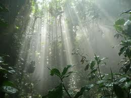 Rainforest Trust to protect 80,000 acres in the Philippines   GarryRogers NatCon News   Scoop.it