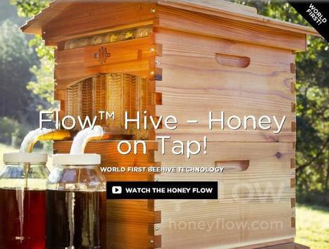 Take The Sting Out of It, Turn A Tap On A Beehive, Watch Warm Fresh Honey Flow | FrenchNewsOnline | French News Headlines | Scoop.it