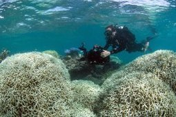 Link between fossil fuels and Great Barrier Reef bleaching clear and incontrovertible   Sustainability & Collective Intelligence   Scoop.it