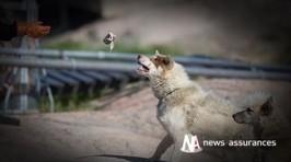 Assurance santé animale : quel intérêt pour l'évaluation ... - News Assurances | Assurance | Scoop.it