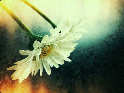 iPhone Photography: Beautiful Photos Taken With iPhone 4 | All Things Photography | Scoop.it