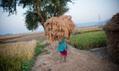 India's rice revolution – audio slideshow   Collected Economics   Scoop.it