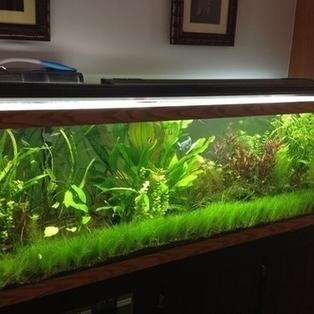 Fish to Avoid for Planted Freshwater Tanks   RateMyFishTank.com   Ornamental Aquatics   Scoop.it