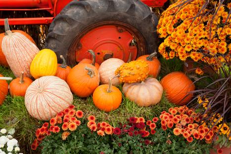 Seasonal Spice: Dilworth Pumpkin Patch   Charlotte North Carolina   Scoop.it