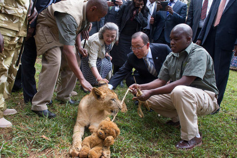 UN chief 'adopts' lion cub to support efforts against wildlife trafficking | Wildlife Trafficking: Who Does it? Allows it? | Scoop.it