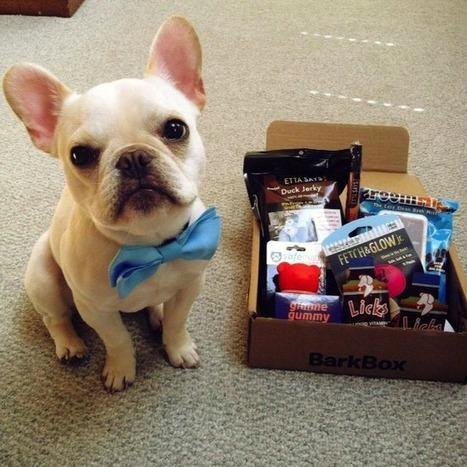 BarkBox | dog lovers | Scoop.it