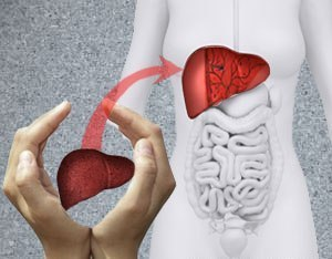 Why is the liver important? | Liver Transplant India | Scoop.it